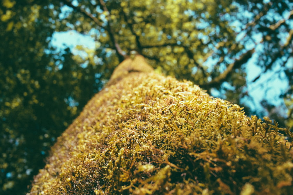 selective focus photography of tree trunk on daytime