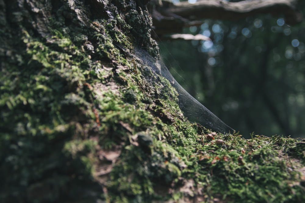 close up photo of green moss on black tree