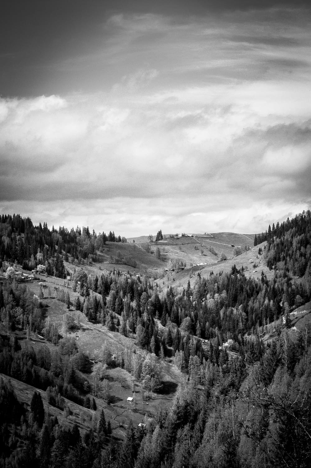 grayscale photo of green trees on mountain at daytimne
