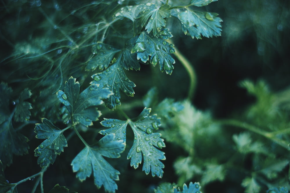 selective focus photography of green leaf with water dews