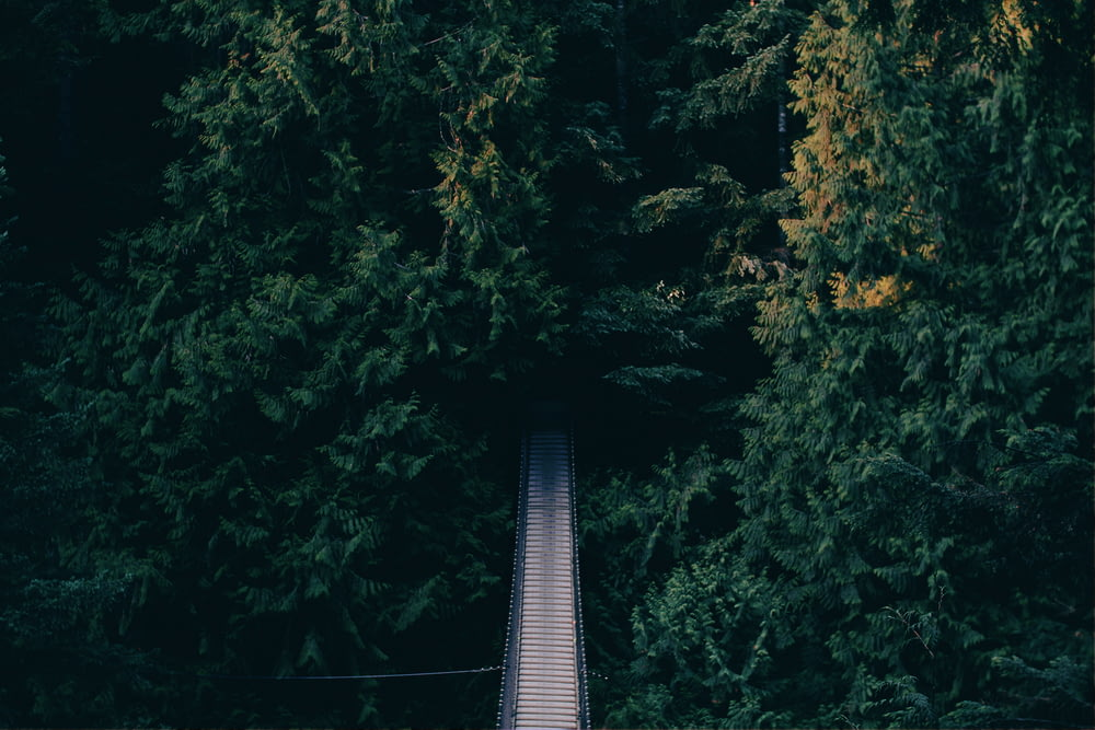 aerial photography of hanging bridge near trees