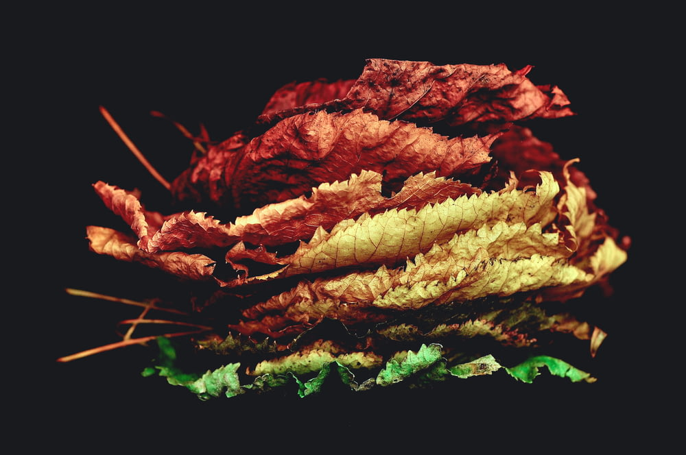 stacked dried leaves