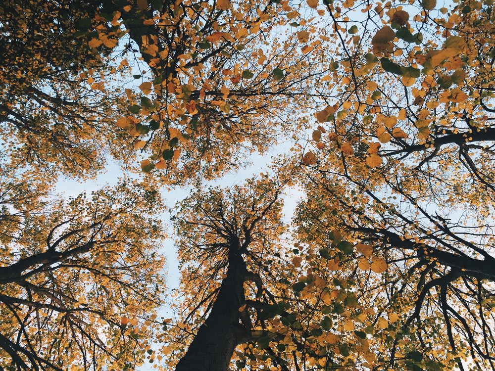 brown leaf trees low-angle photgraphy