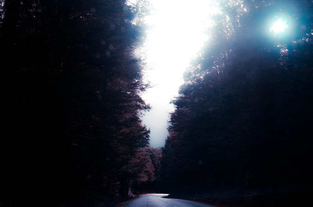 asphalt road in the middle of trees during daytime