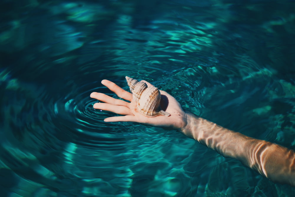 brown conch shell on right human palm