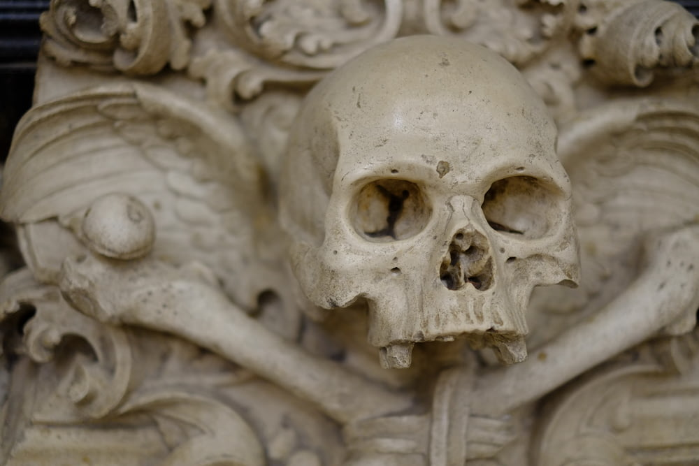 closeup photo of human skull