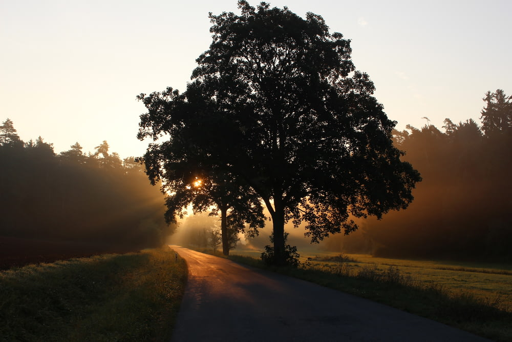 silhouette of tree beside the tree