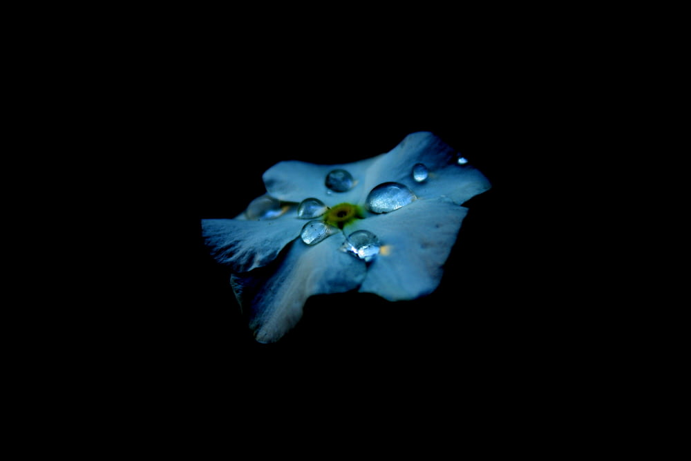 blue flower with water drops