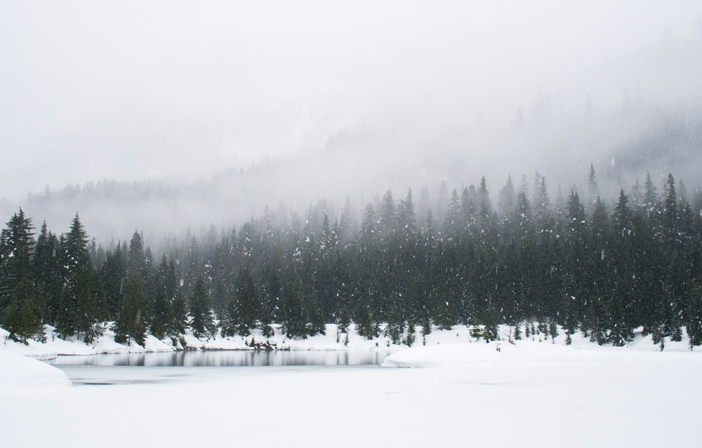 snow field and green pine trees during daytime