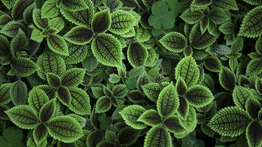 close up photo of green leafed plant