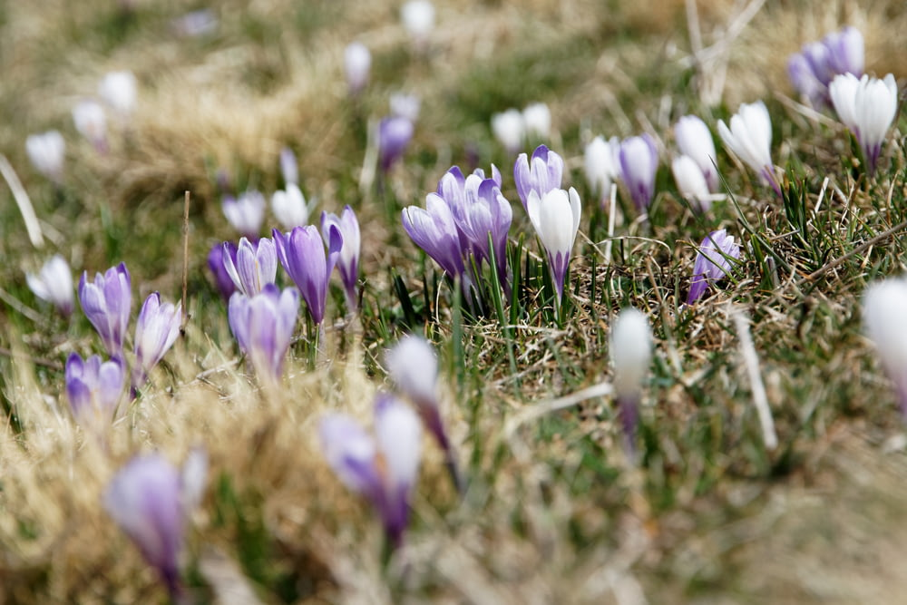 selective focus photography of white and purple petaled flowers during daytime