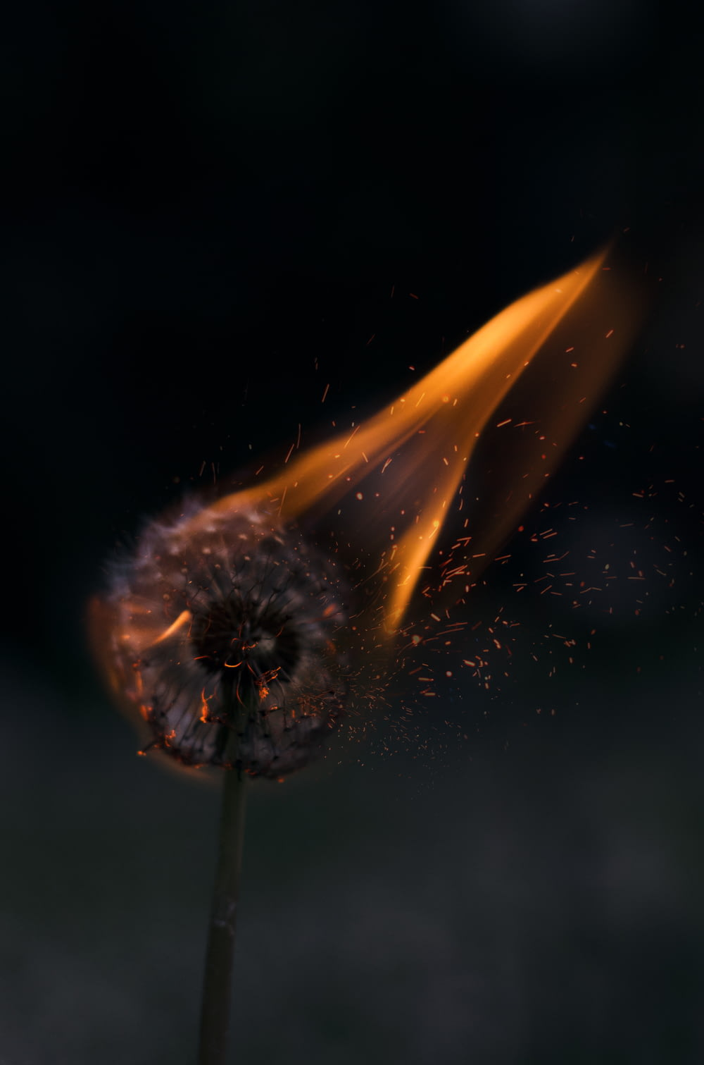 burning white dandelion
