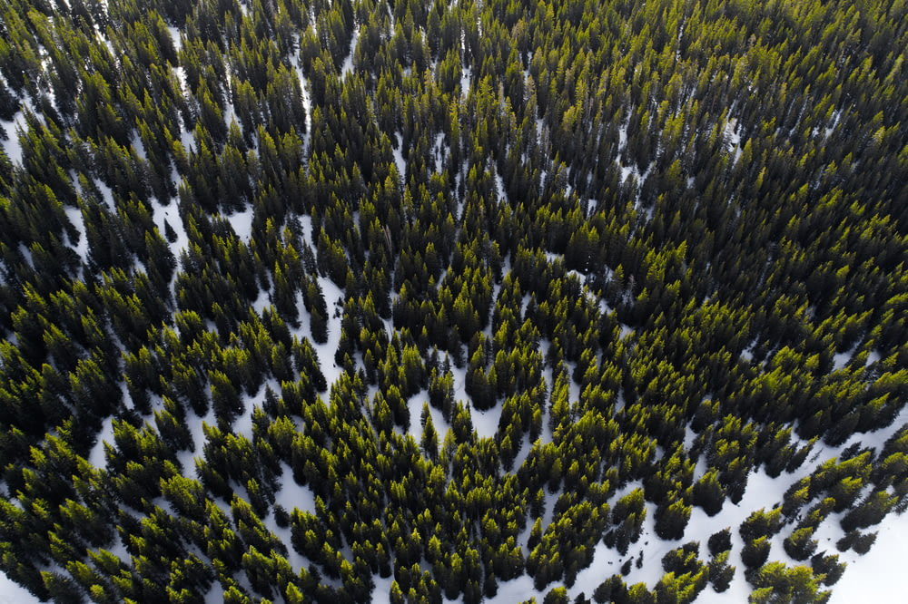aerial photography of trees in winter at daytime
