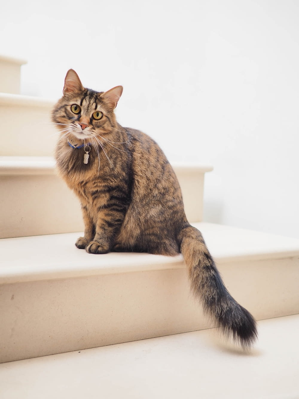 brown tabby cat on white stairs