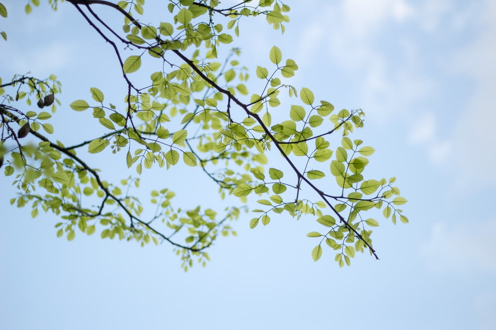 low-angle photography of green leafed tree
