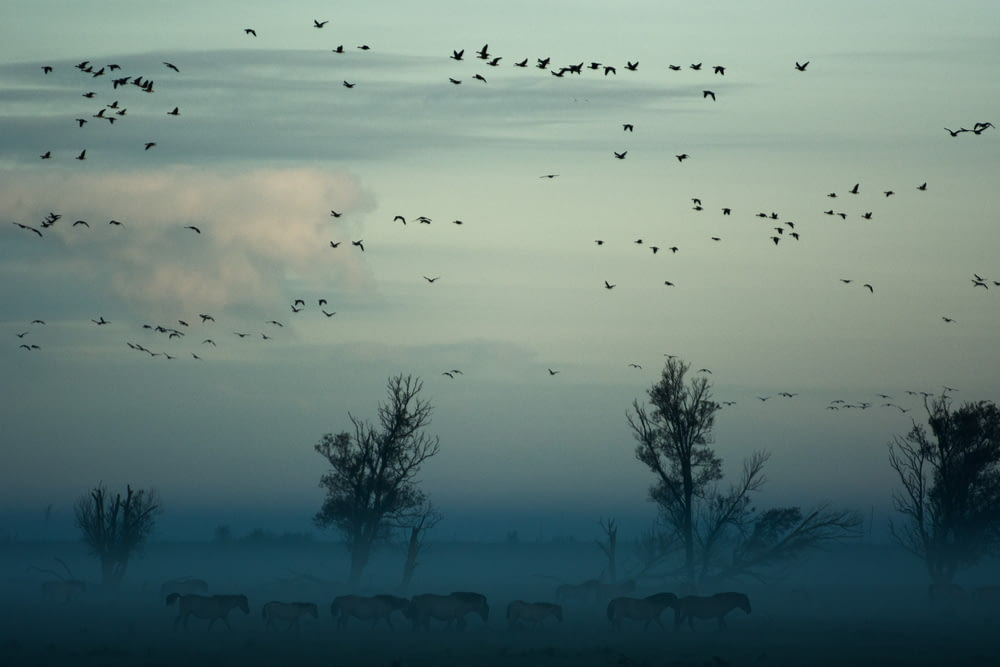 flying birds above herd of animals near trees