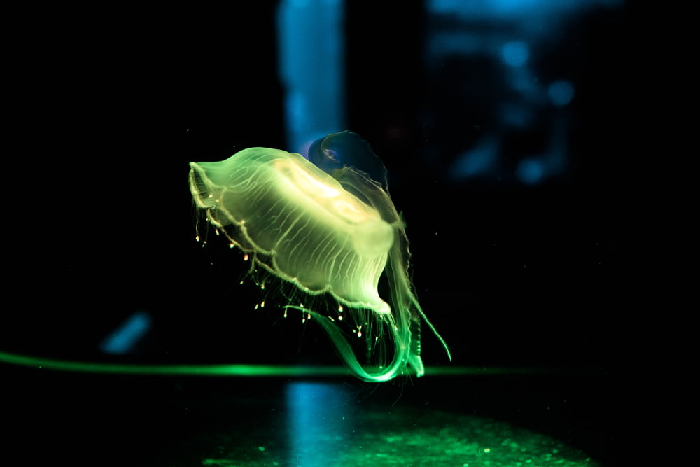 green jellyfish