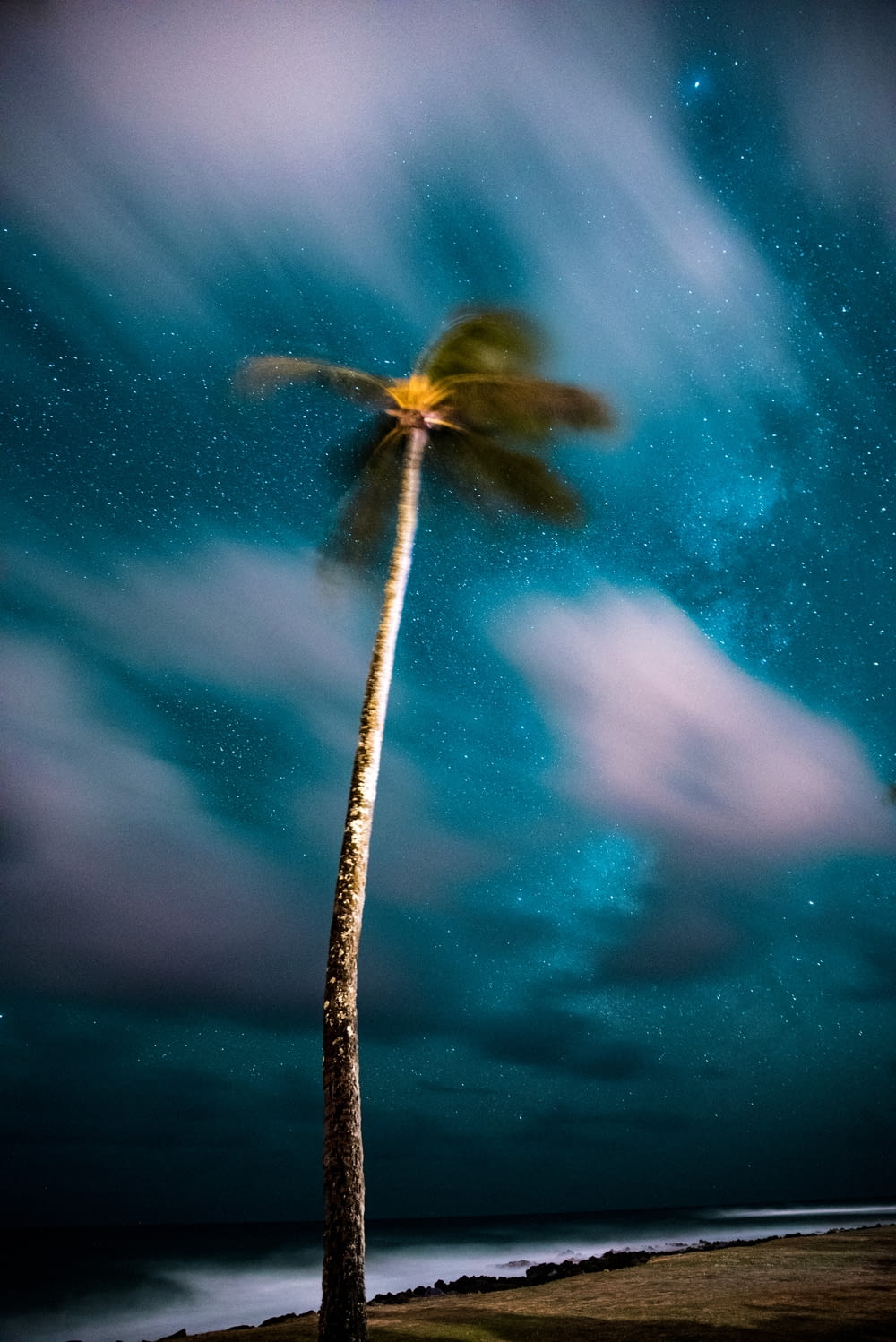 shallow focus photography of coconut tree