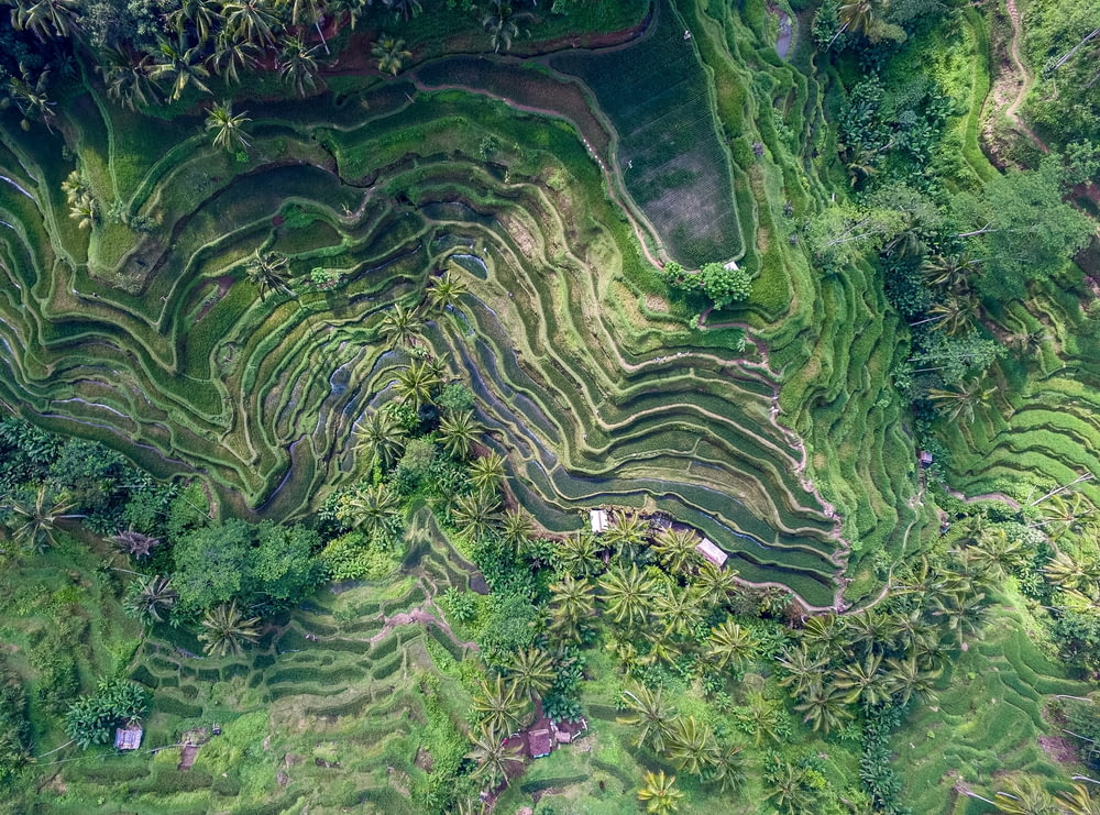 top view of rice terraces