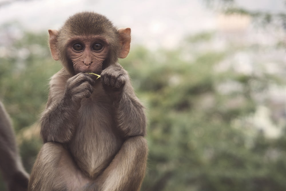 selective photo of brown and white primate