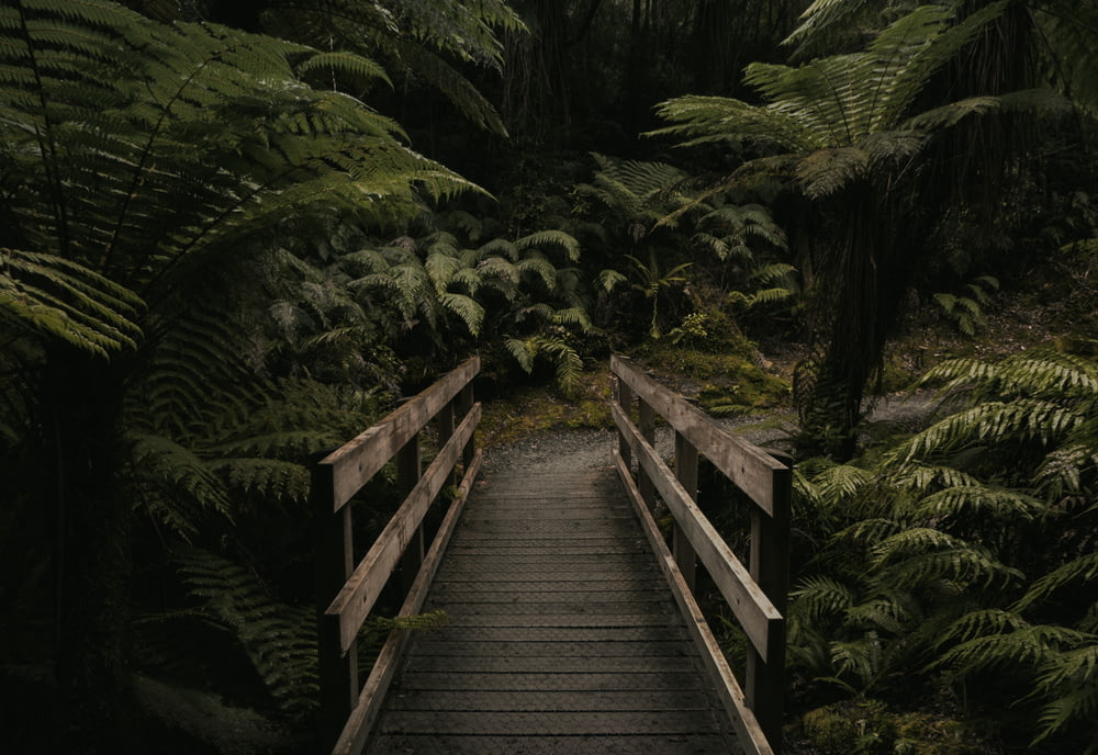 forest mini bridge