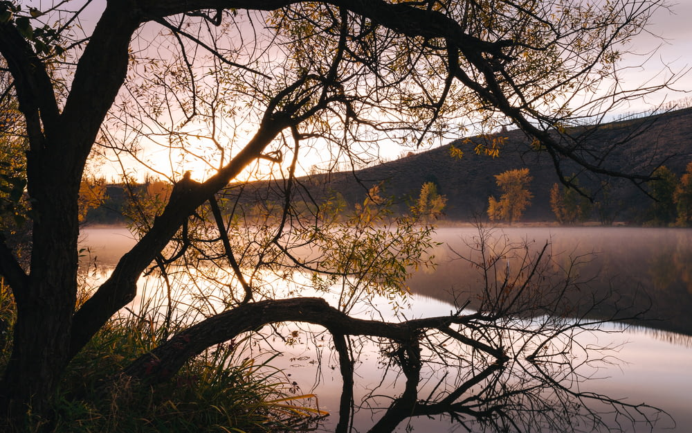 tree near body of water and hill at distance