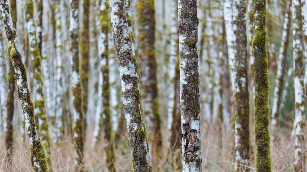 shallow focus photography of brown tree trunks