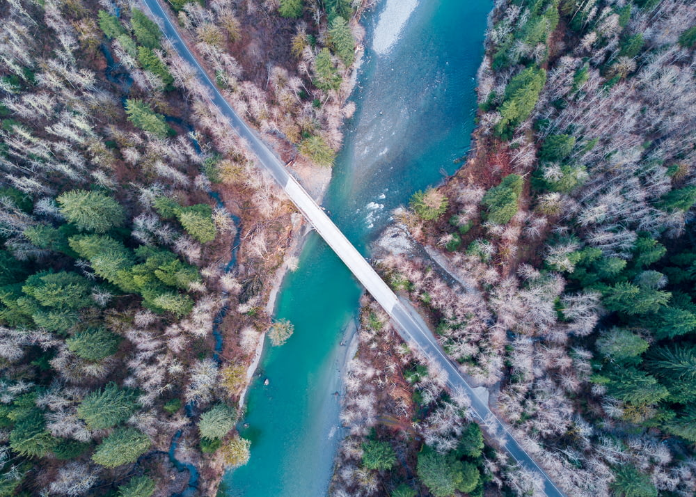 aerial photography of bridge near forest