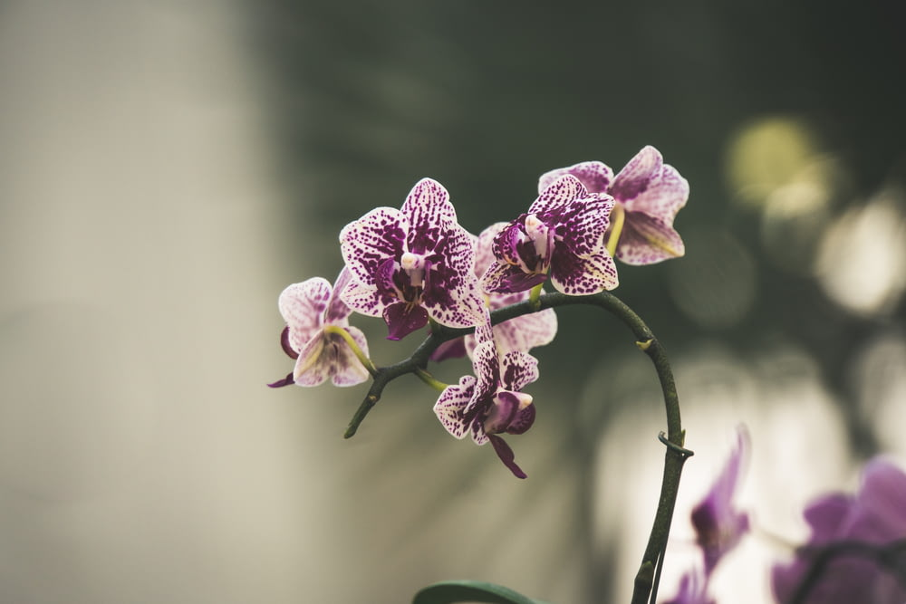 shallow focus of purple orchid