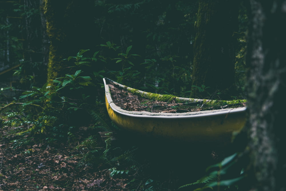 yellow canoe between trees