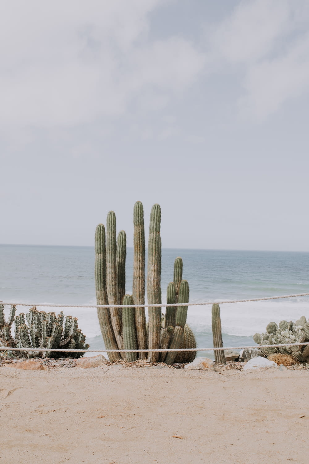 cactus on shore under cloudy sky