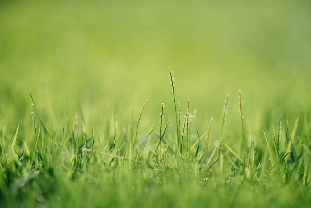 green grass closeup photography