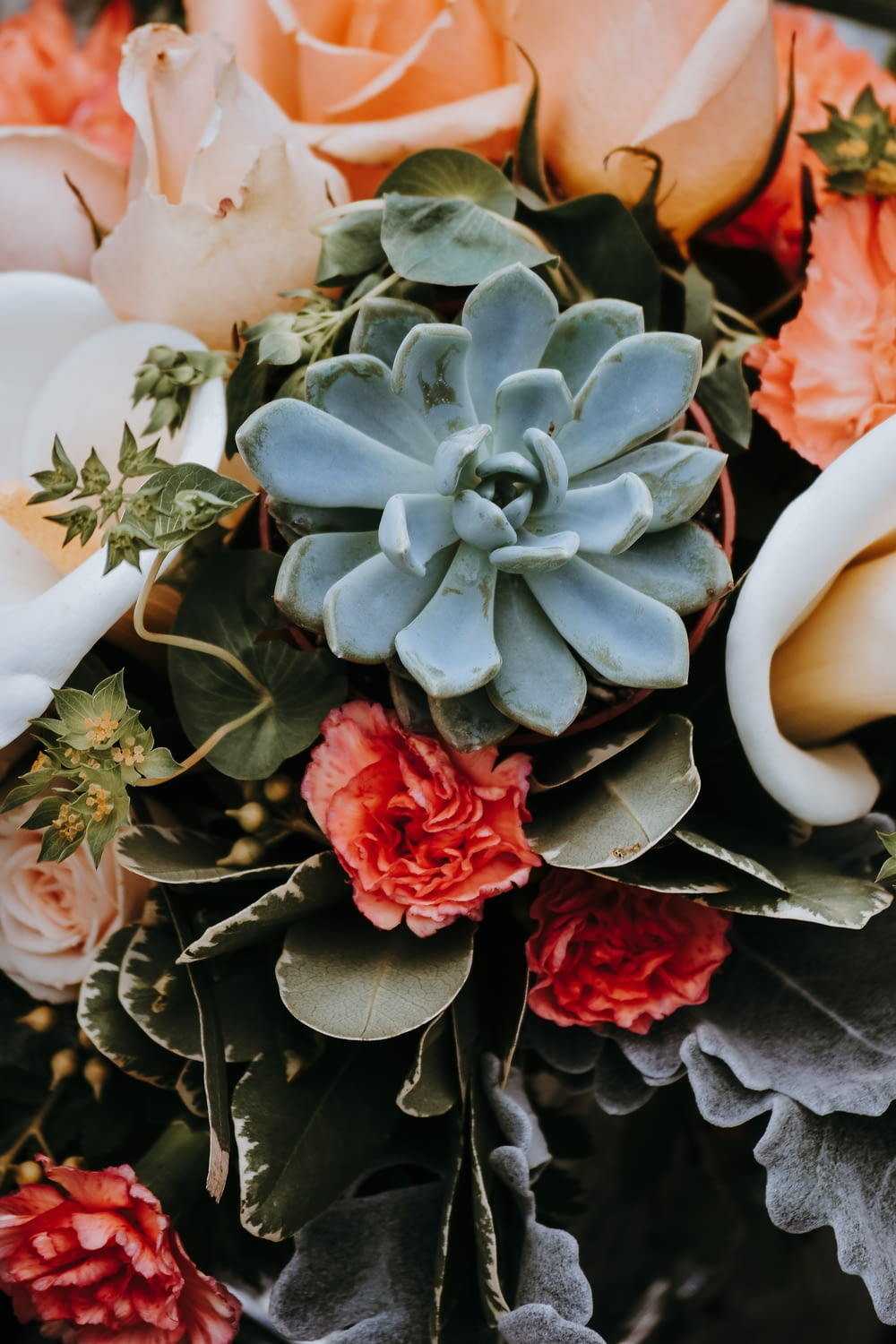 succulent plants and pink roses