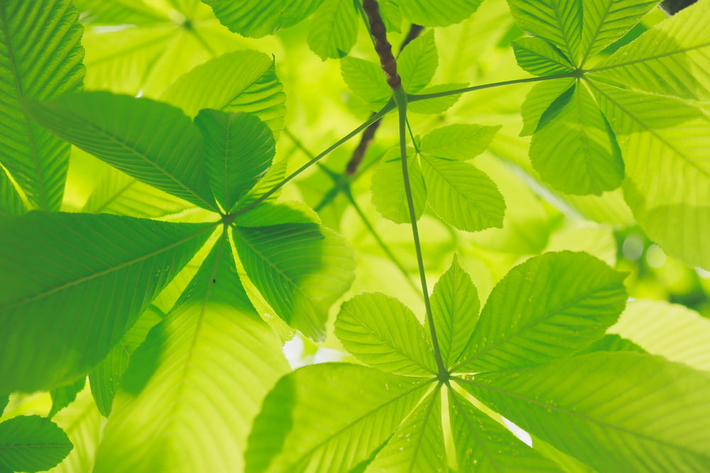 selective focus of green plants