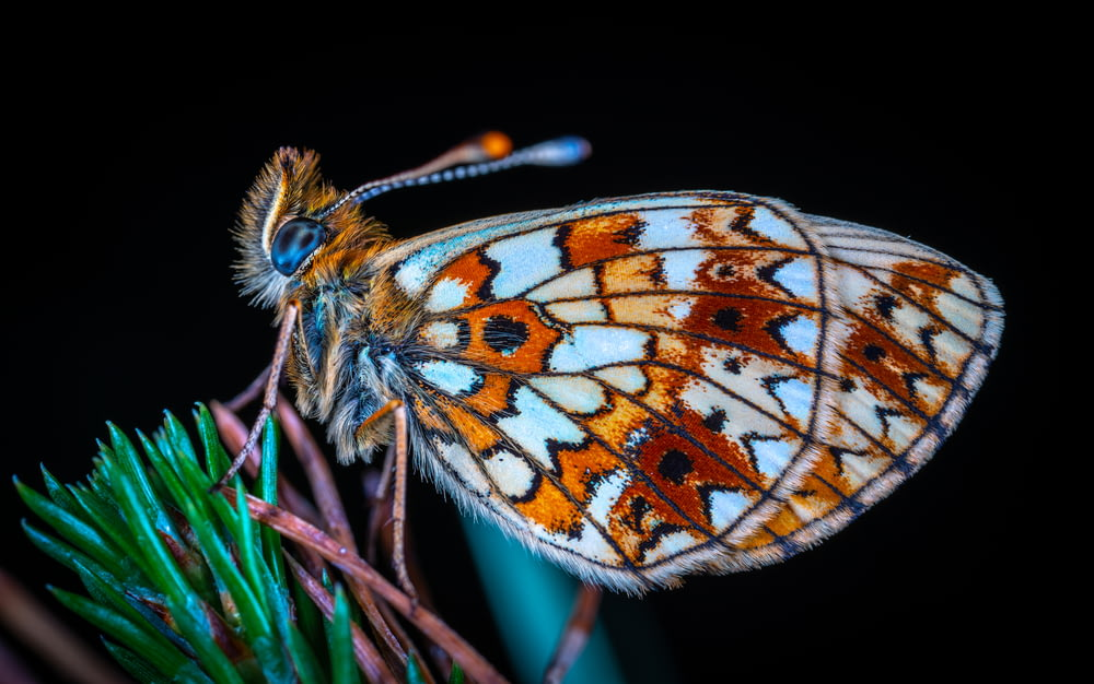 orange and white butterfly on green and pink plant
