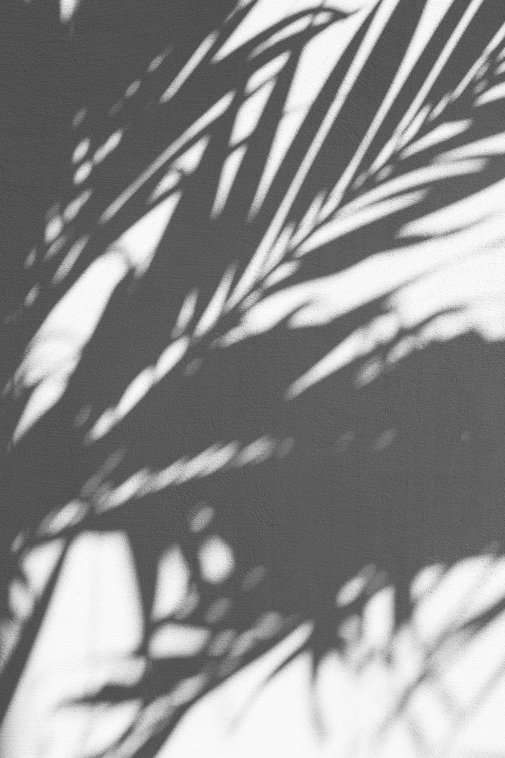 silhouette of palm tree