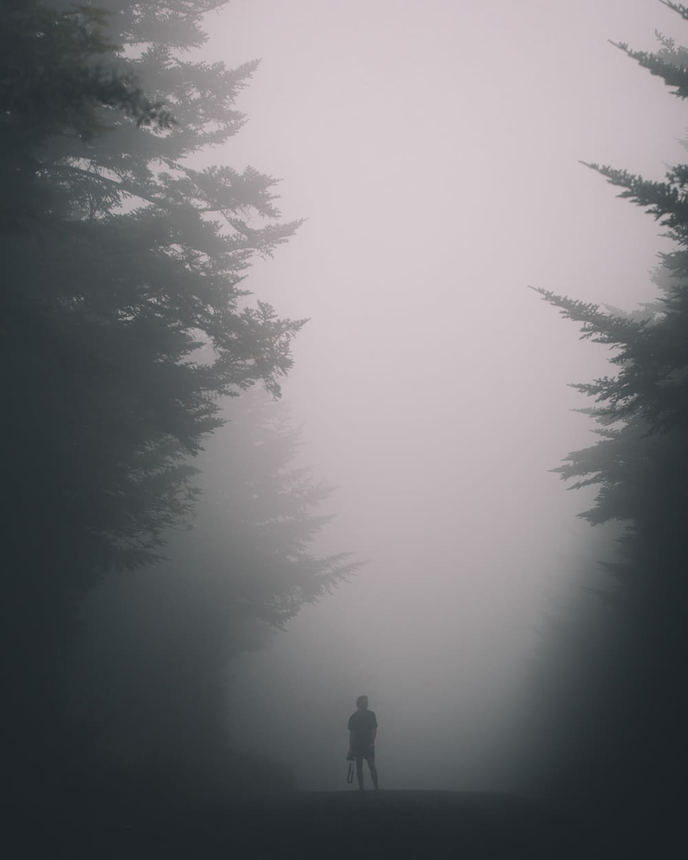 person standing beside trees