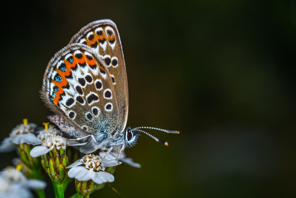 selective focus photo of brown and white butterfly