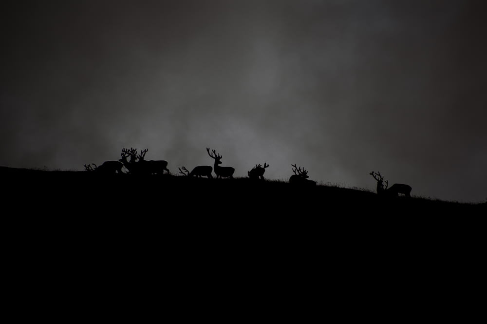 silhouette of herd of deer under cloudy sky
