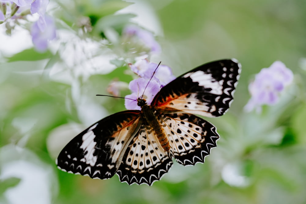 selective focus photography of black butterfly