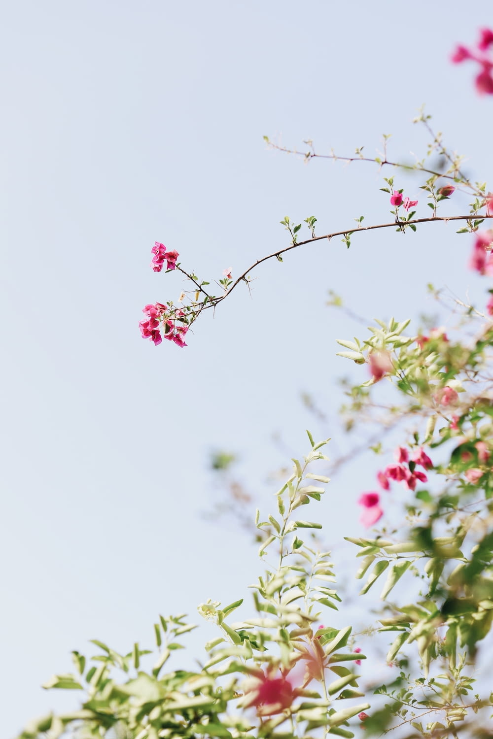bokeh photography of green-leafed plant with pink flowers