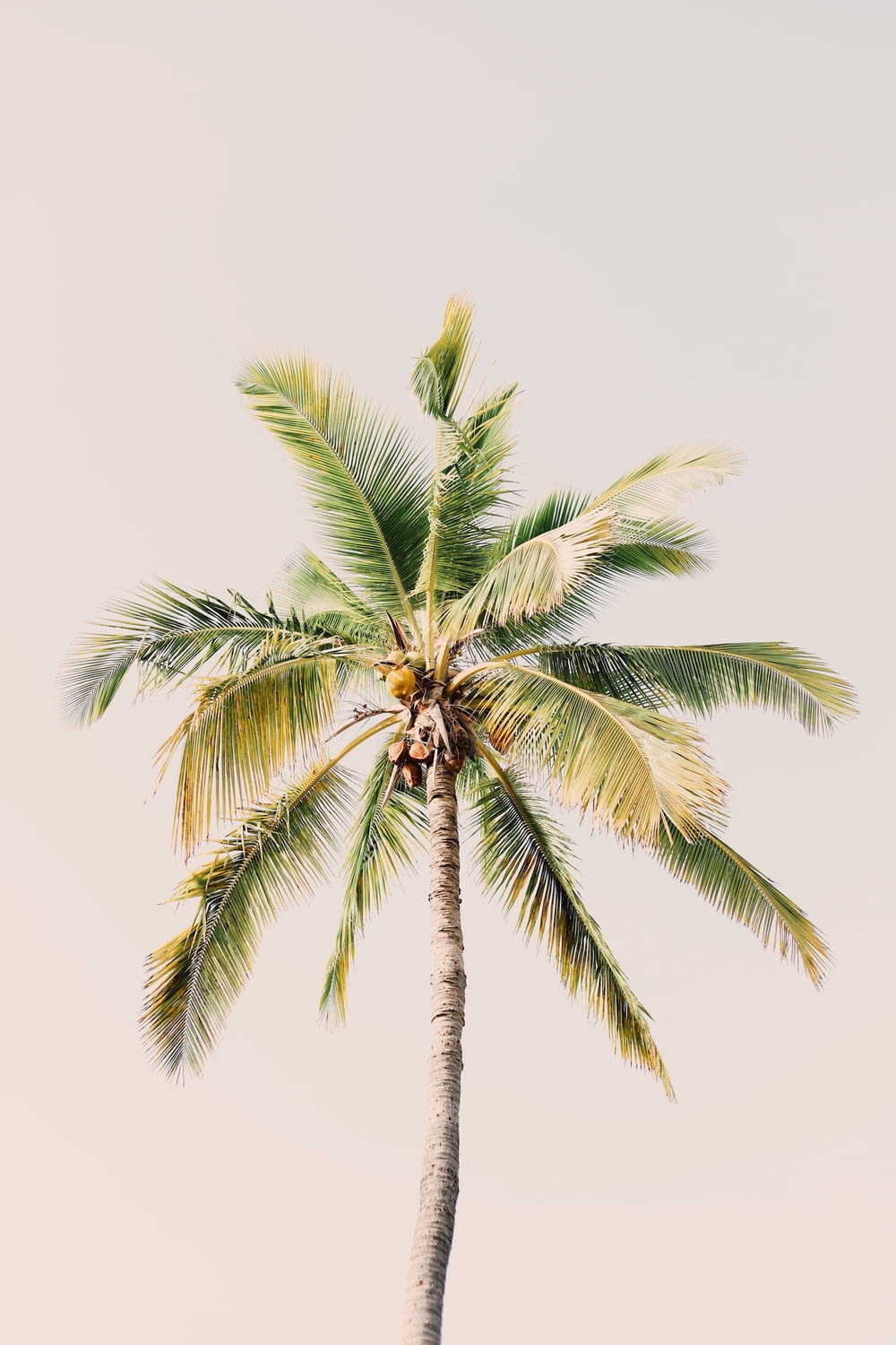 green coconut tree at daytime