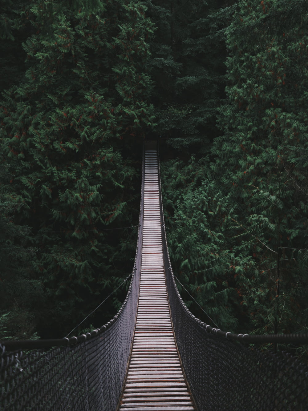 bridge in the middle of the forest