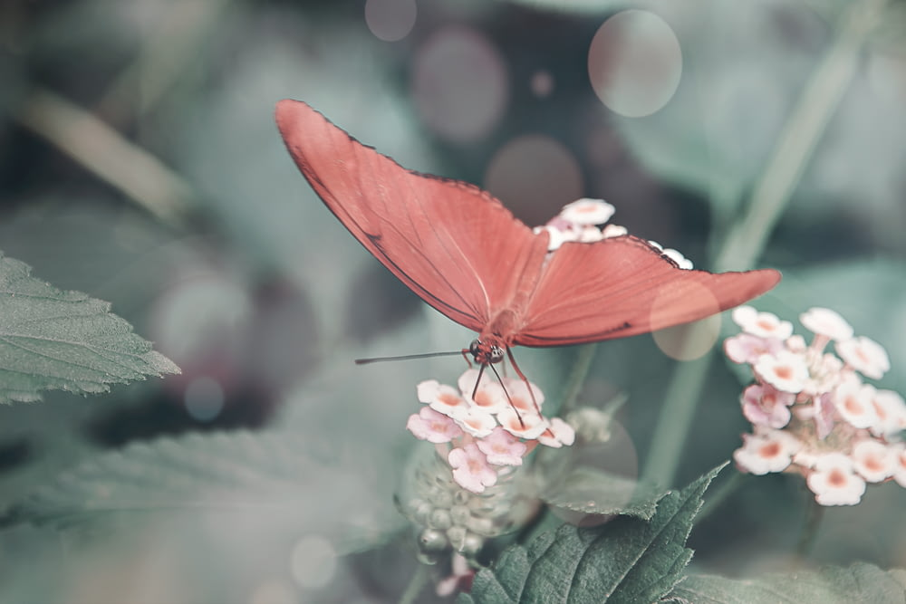 pink butterfly perched on pink flower