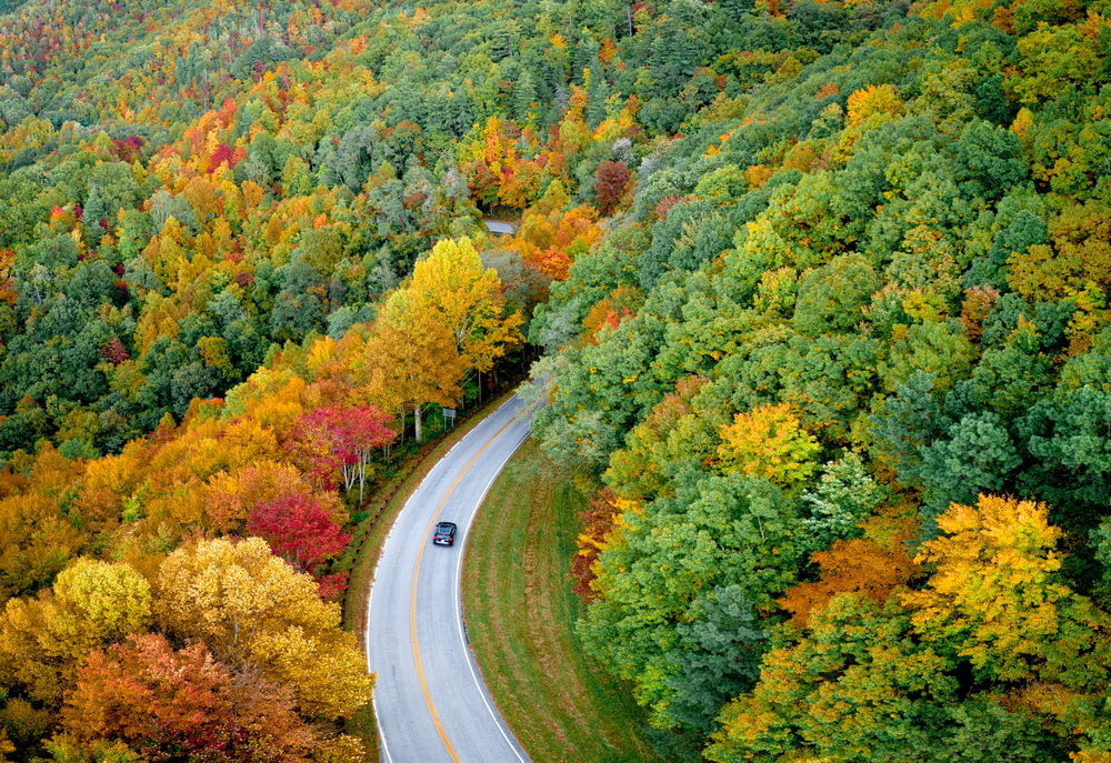 high-angle photography of car on road between trees