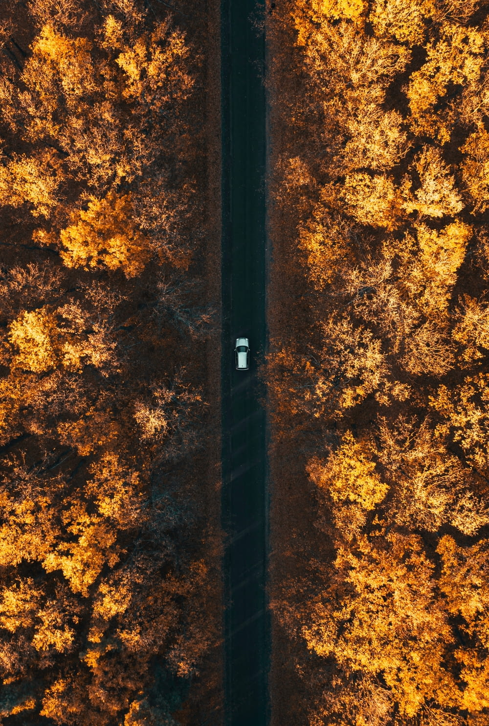 aerial photography of car in forest