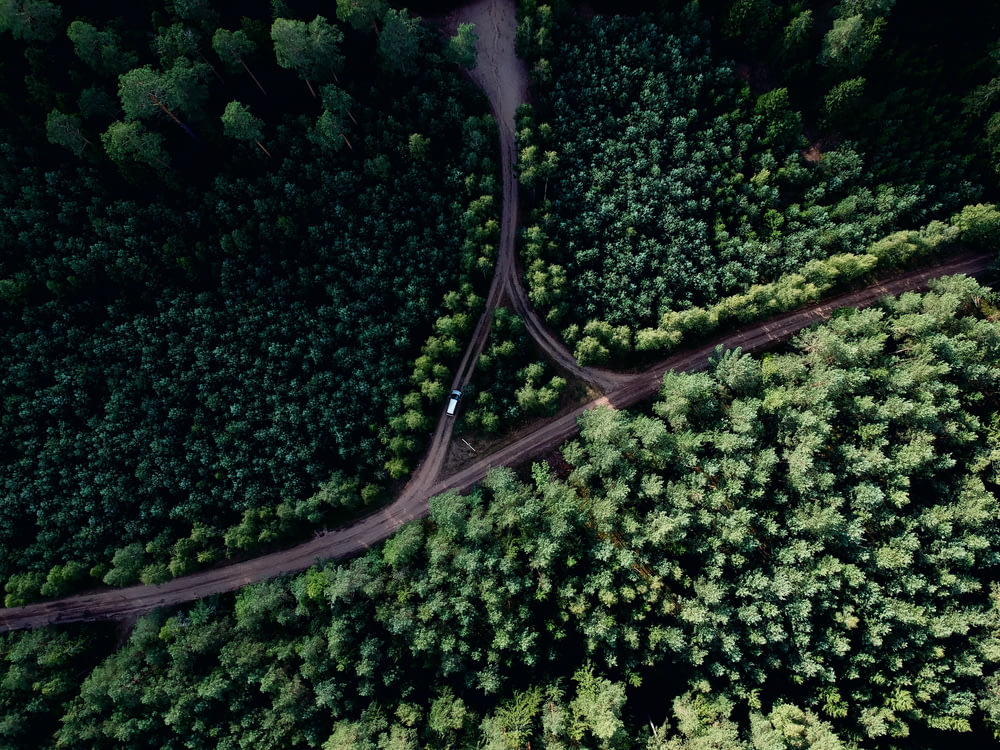 aerial photo of road at middle of forest