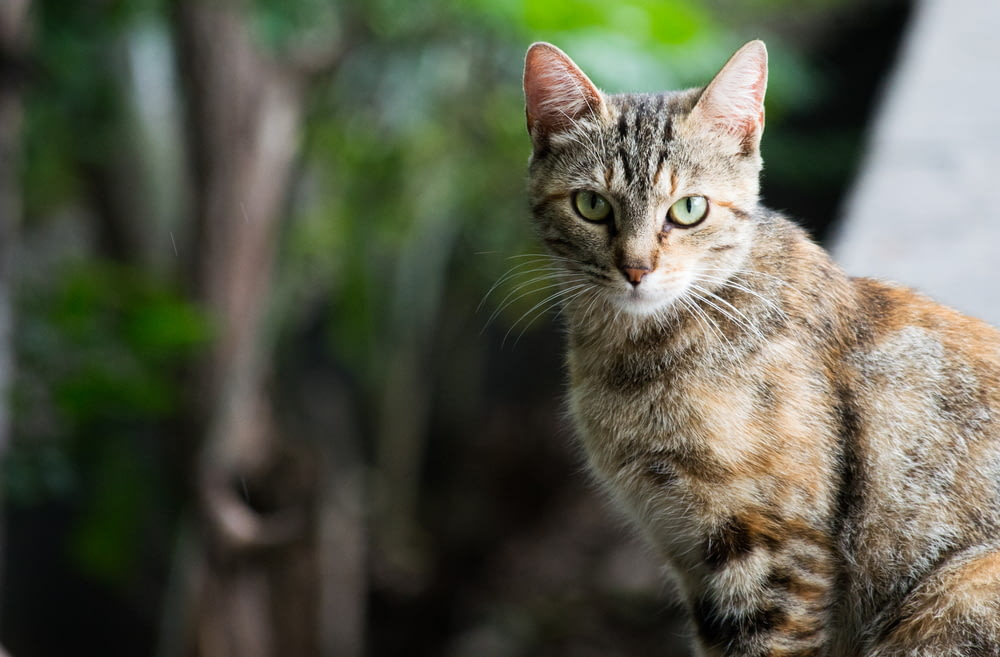 calico cat selective focus photography