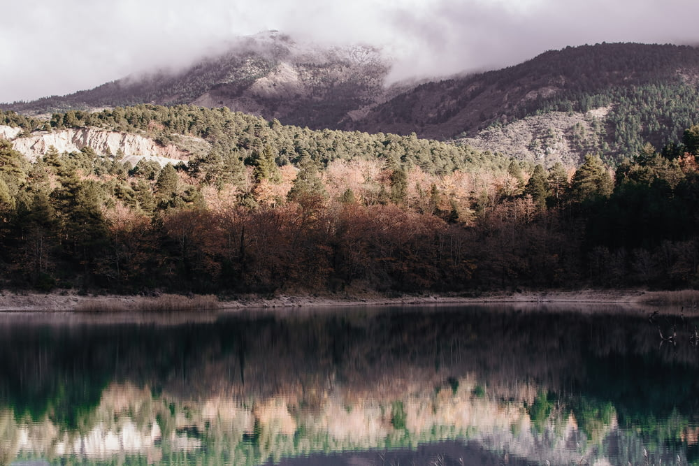 reflection photography of mountain covered with green trees