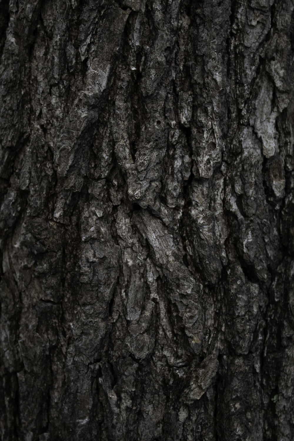 close up photo of tree